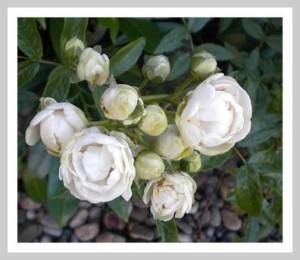 Blumen als Beetschmuck