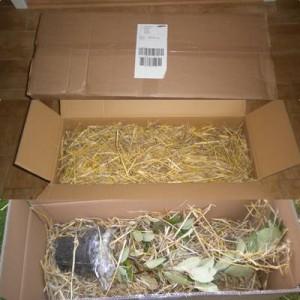 Auspackbilder meiner Aronia Pflanze
